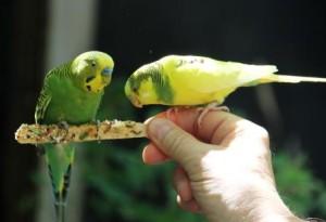 Feeding_birds