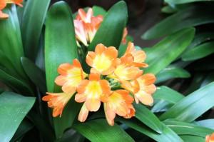 Indoor atrium flowers