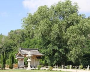 Japanese Sunpu garden gate