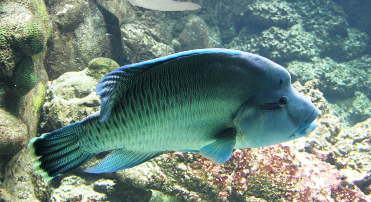 Henry doorly zoo omaha a zoo lover must see midwest for The fish omaha