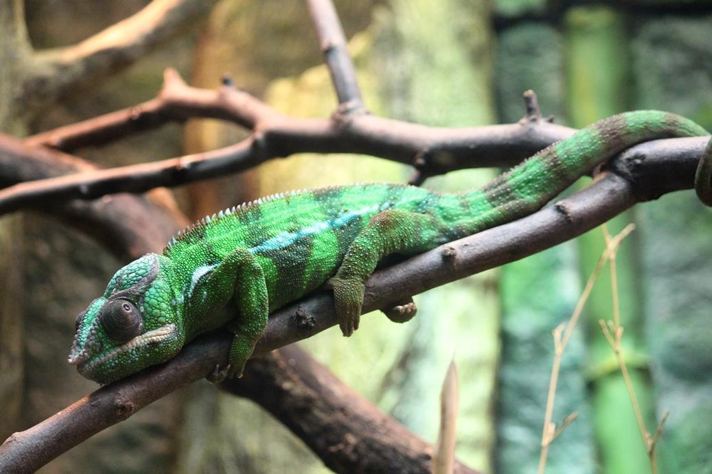 Reptiles at Henry Doorly Zoo