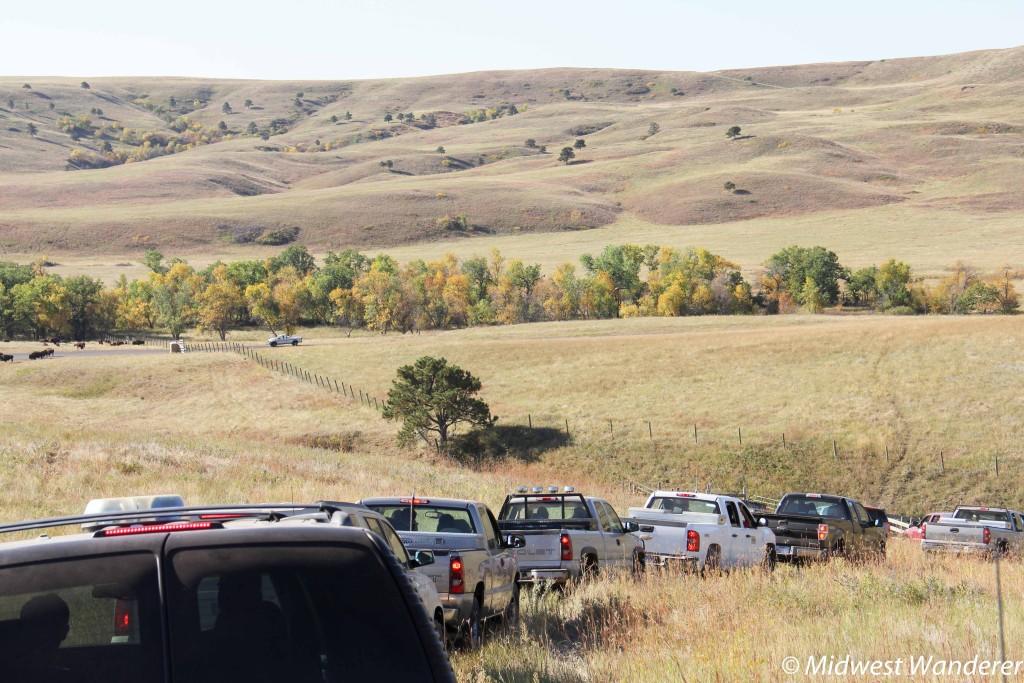 Caravan to Buffalo Roundup