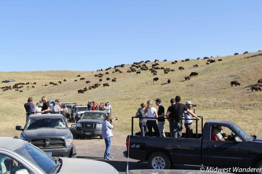 Before the Buffalo Roundup