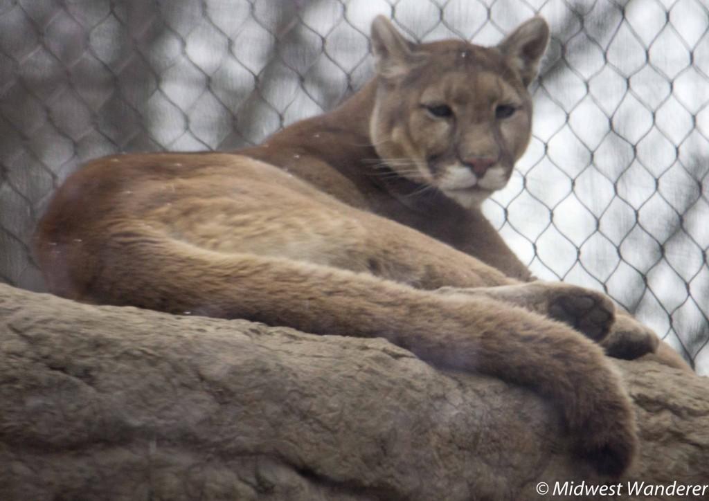 150328_MO_Springgield_Zoo-3832