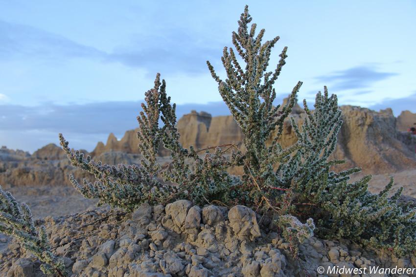 Plant among the rocks