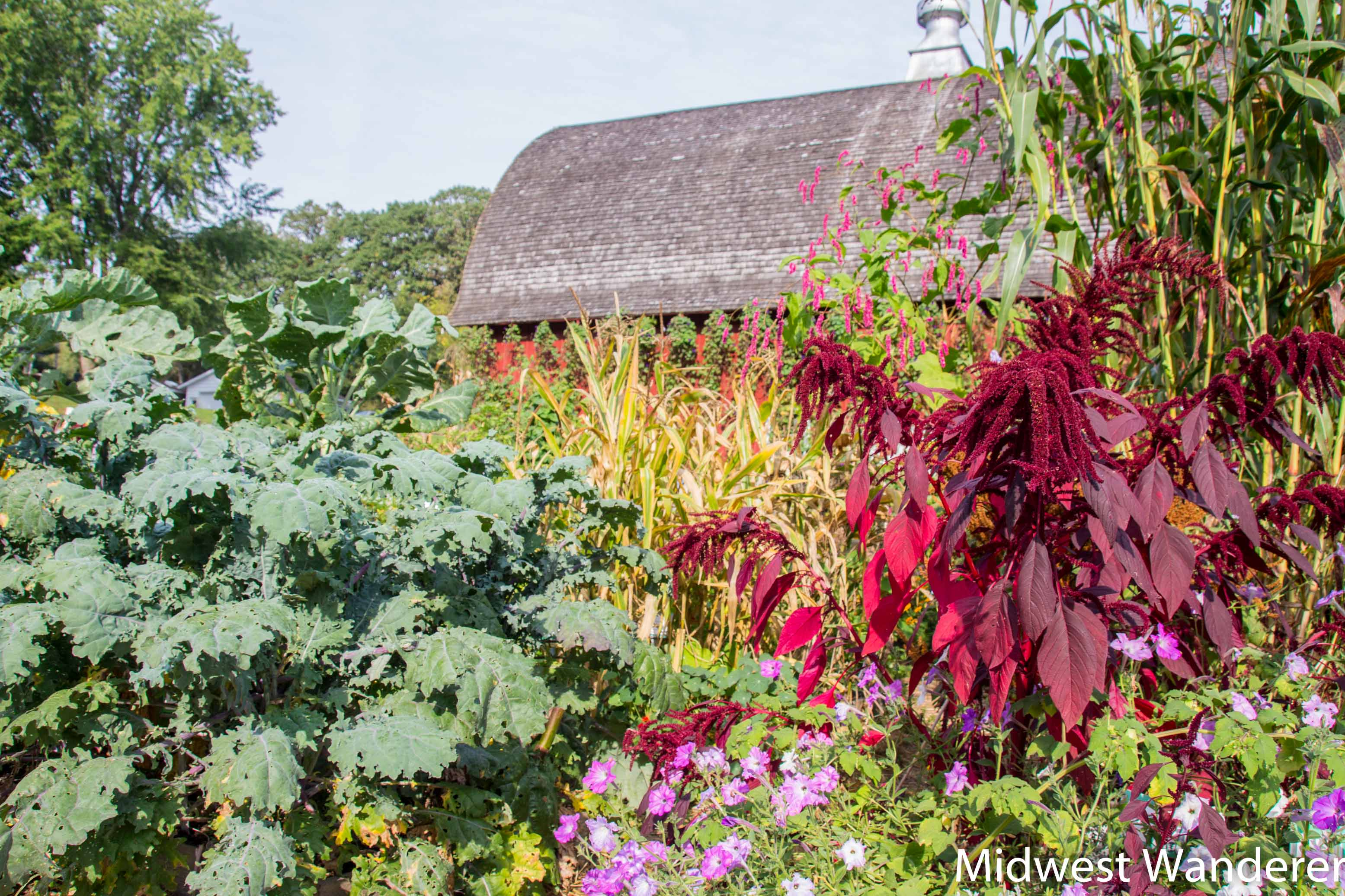 Garden at Seed Savers Exchange