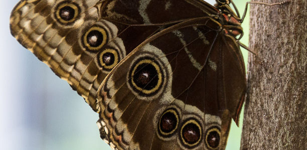Hershey Gardens Opens Tropical Butterfly Atrium