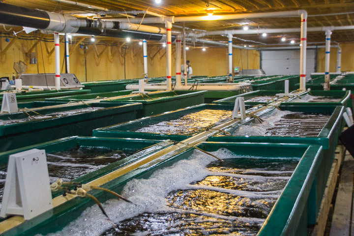 VeroBlue Farms fish tanks, Webster City