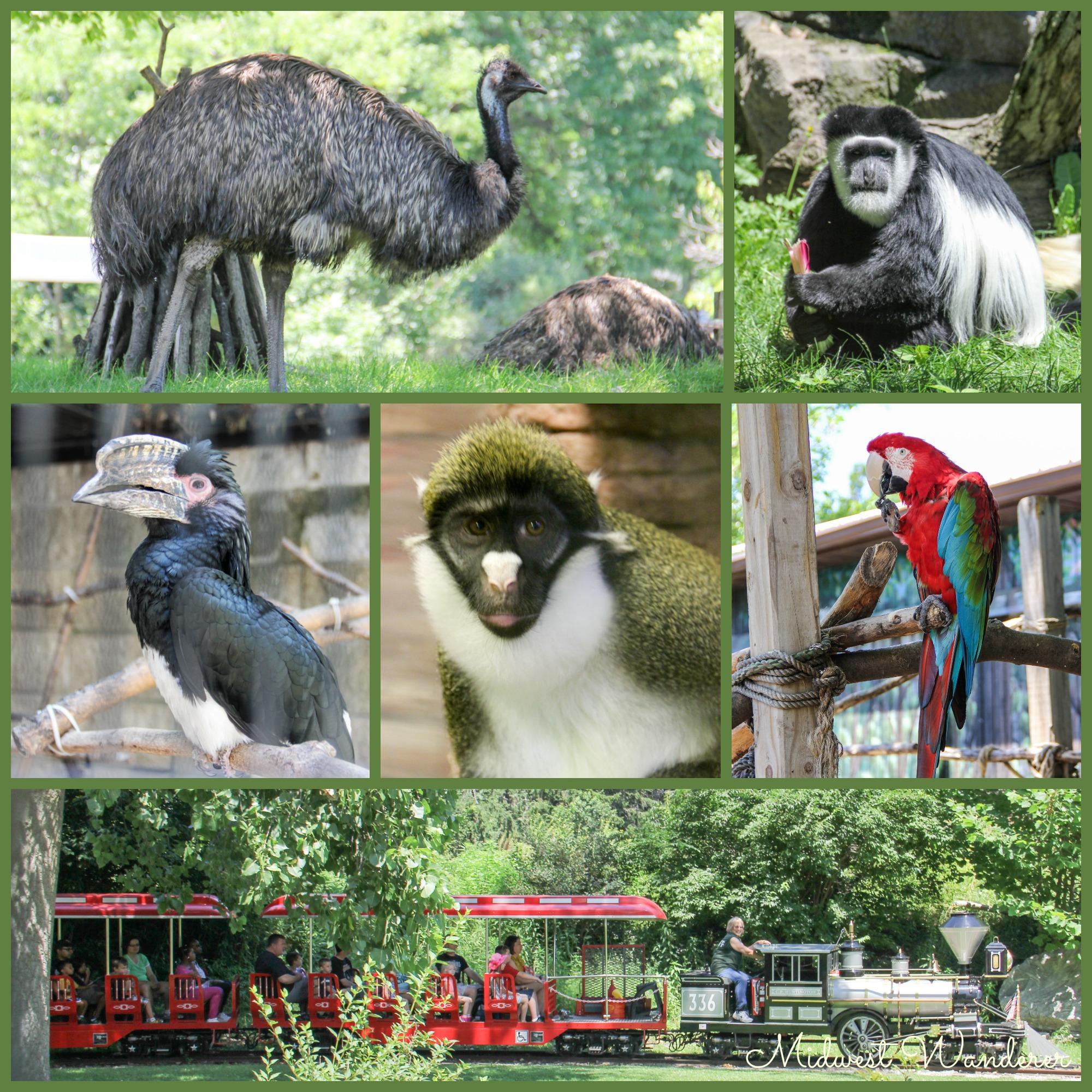 Potawatomi Zoo - Small Midwest Zoos
