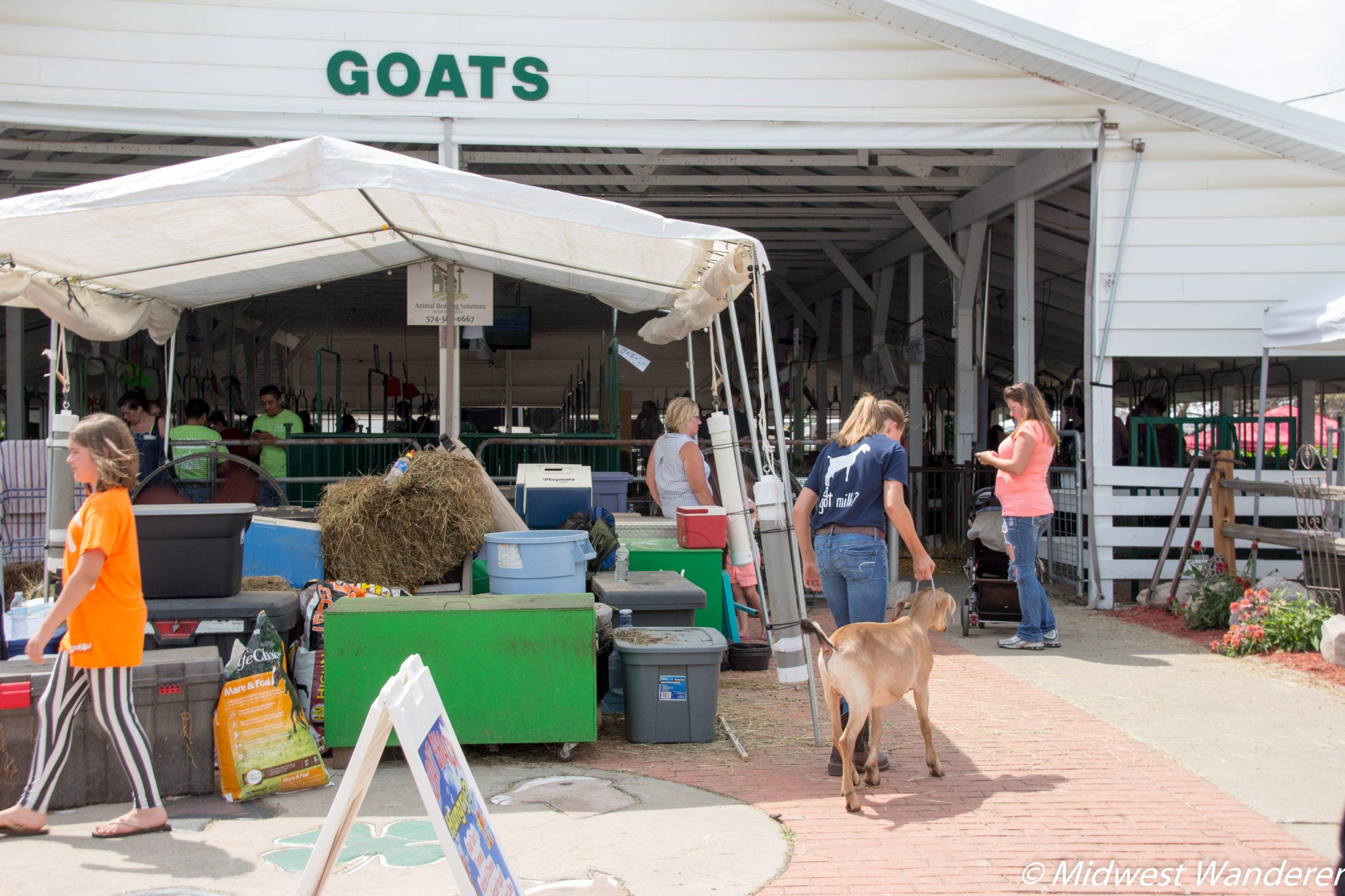 Elkhart County Fair - goat