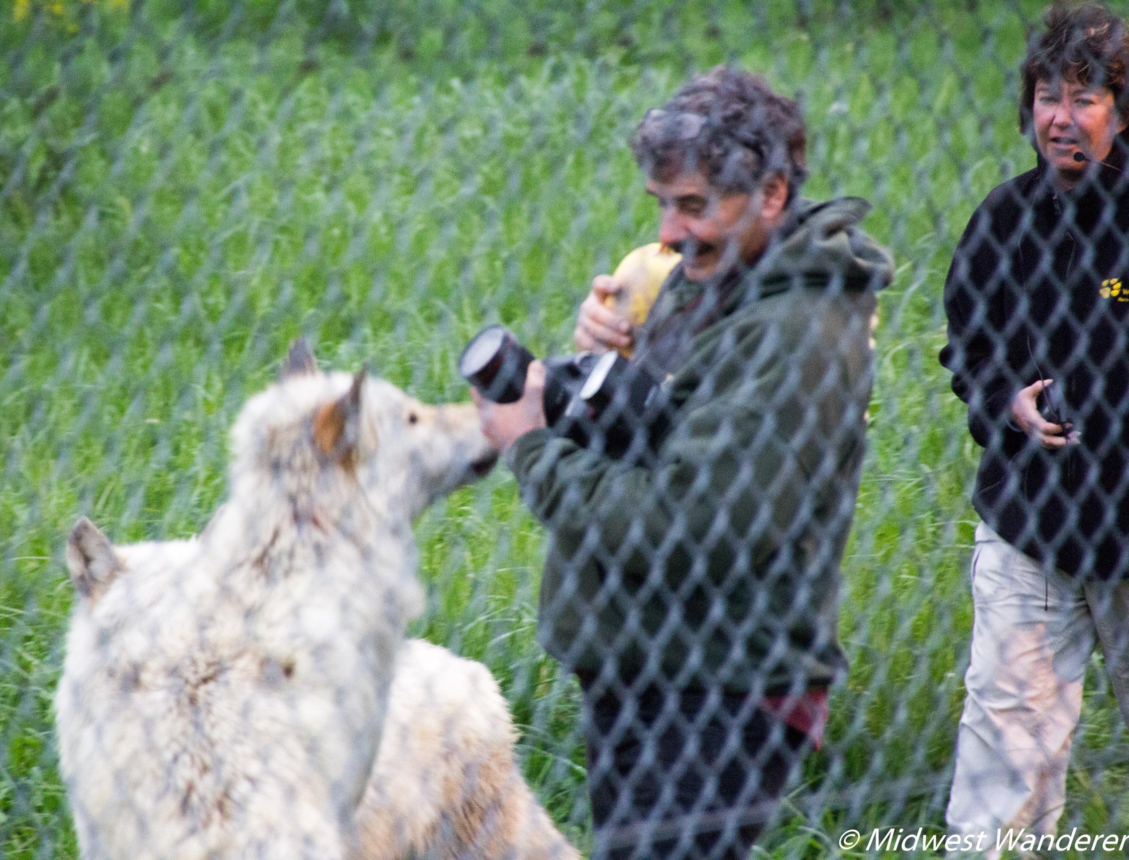 Wolf Park 4