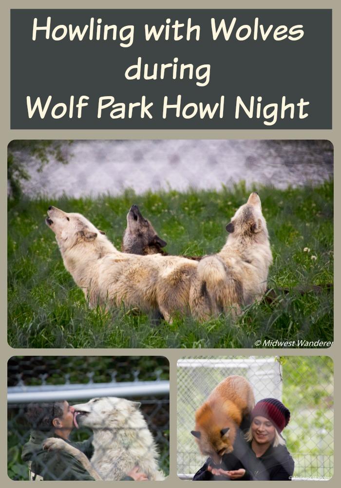 Wolf Park Howl Night