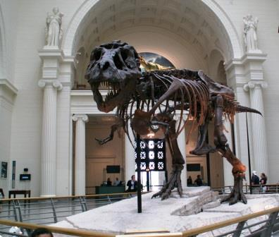 Sue the t.rex at Field Museum of Natural History