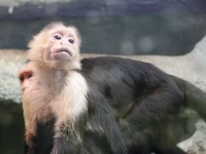 Monkey_2