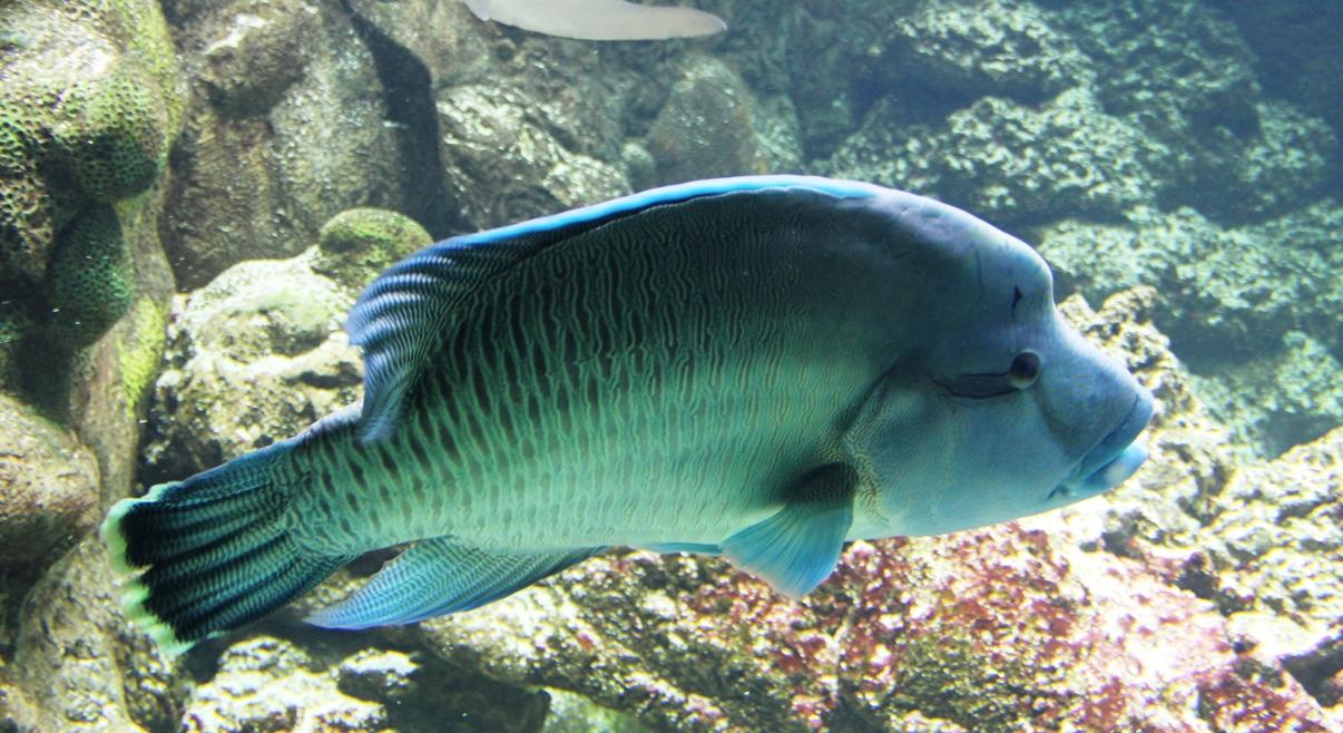 Fish in Henry Doorly Zoo aquarium