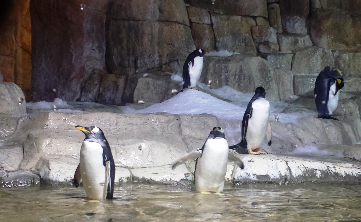 Penguins, Henry Doorly Zoo