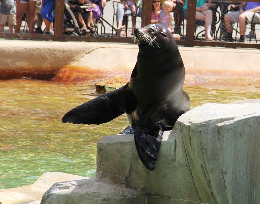 Sea lion show, Henry Doorly Zoo