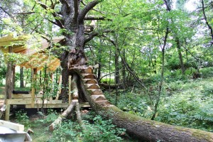 tree with stair steps