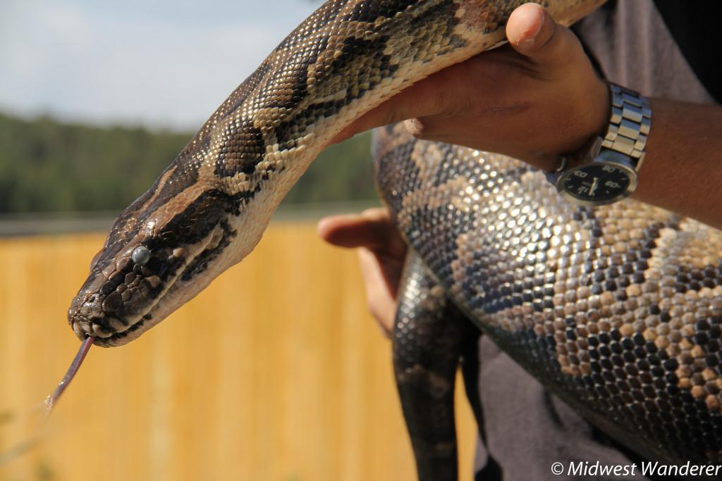 140922_Reptile_Gardens-22