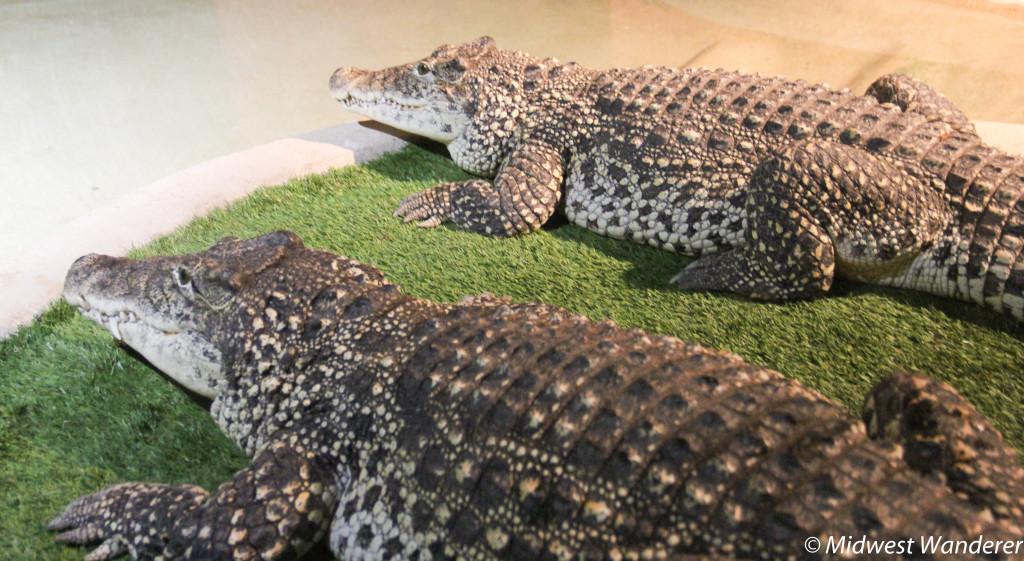 140922_Reptile_Gardens-80