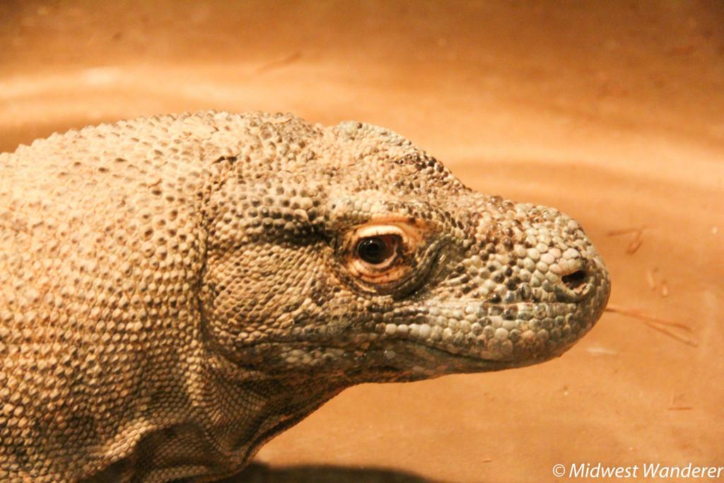 140922_Reptile_Gardens-84