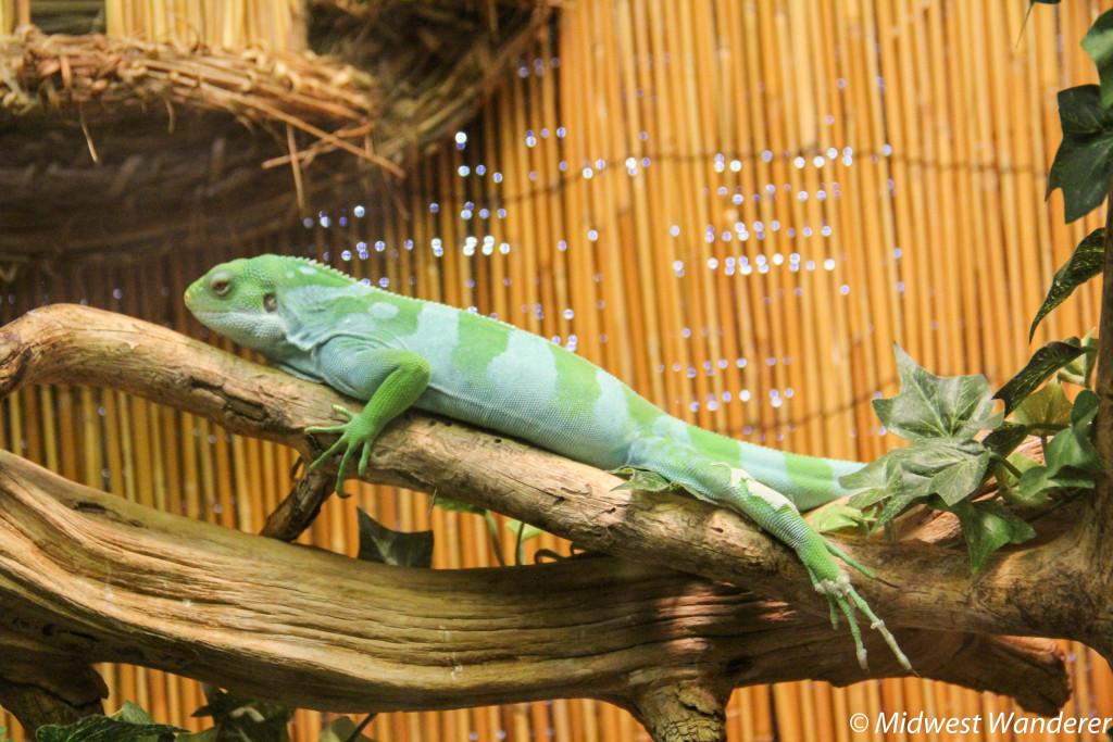 140922_Reptile_Gardens-85