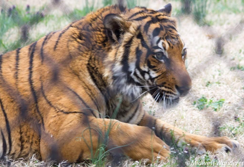 150328_MO_Springgield_Zoo-3838
