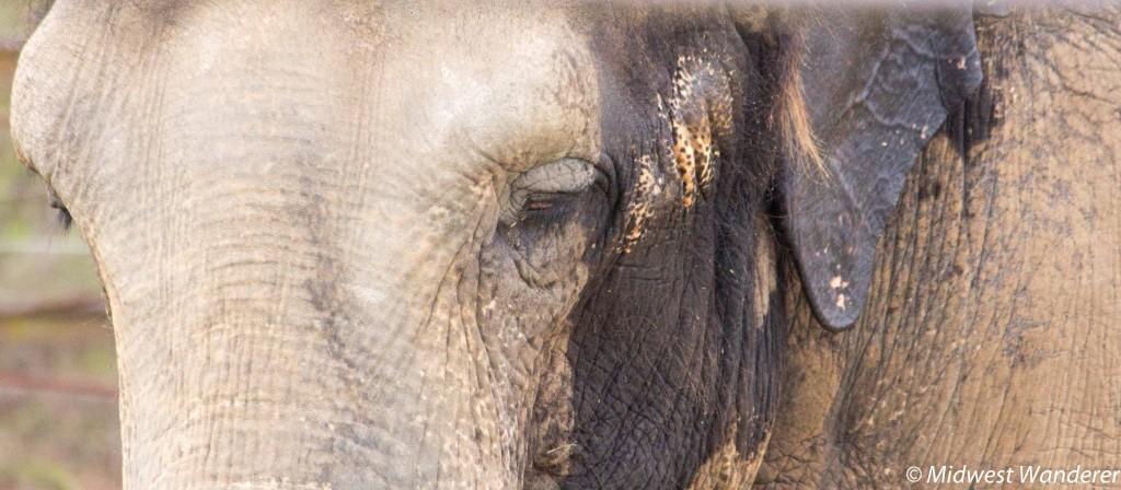 150328_MO_Springgield_Zoo-3843