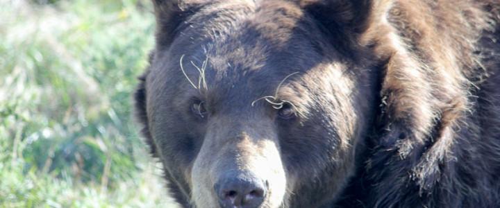 Driving Through Bear Country USA