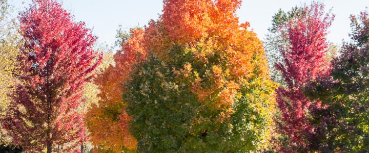 Exploring the Gardens of Nathanael Greene/Close Memorial Park in Off-Peak Seasons