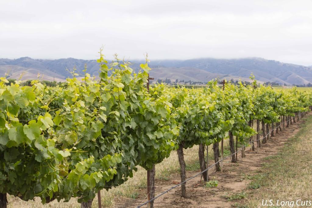 Vineyards on Ag Venture Tours