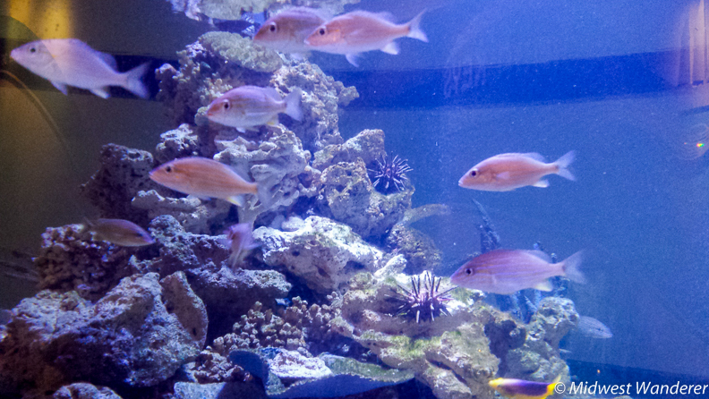Reiman Aquarium, Discovery World
