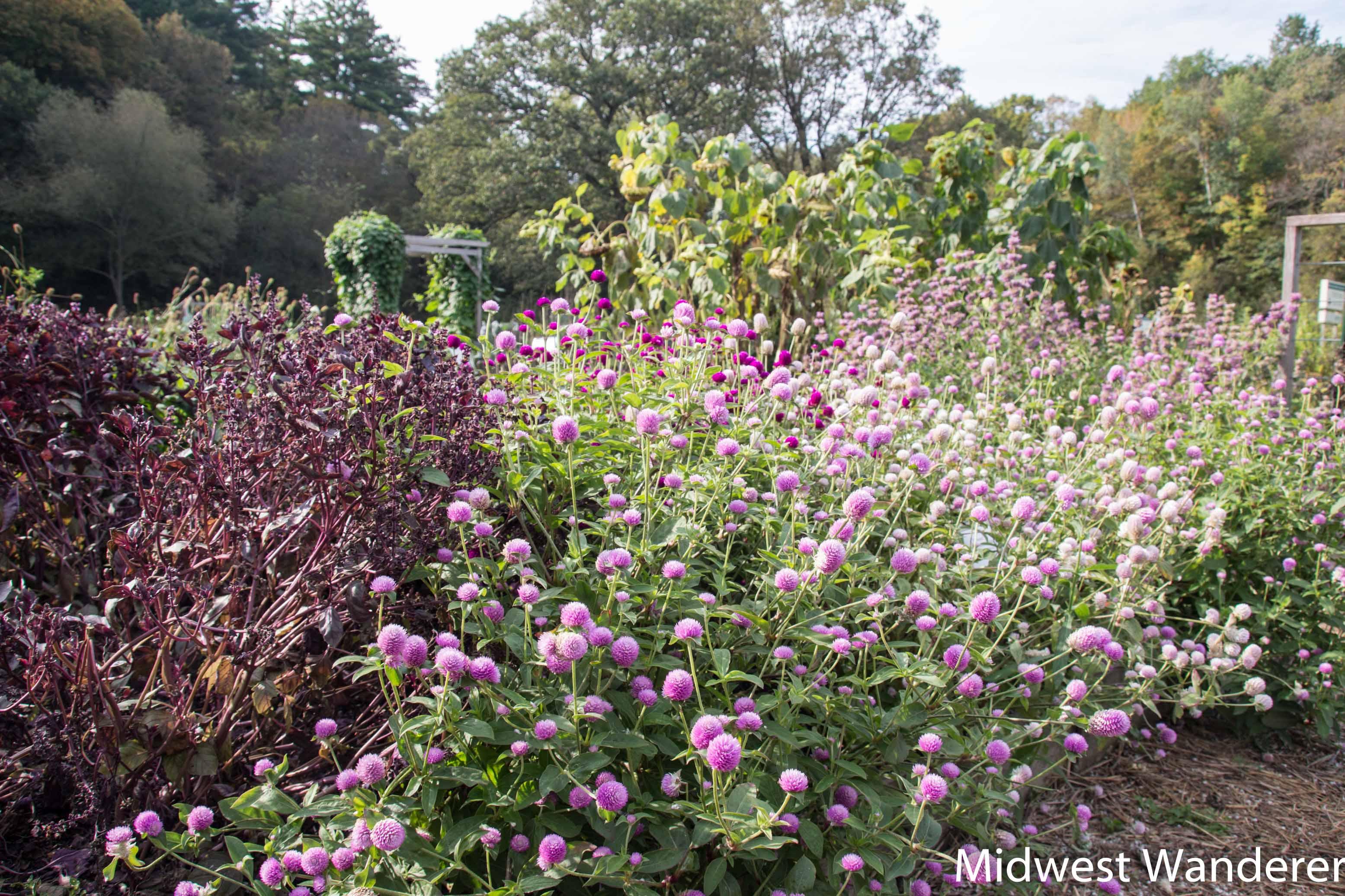 Display garden at Seed Savers Exchange