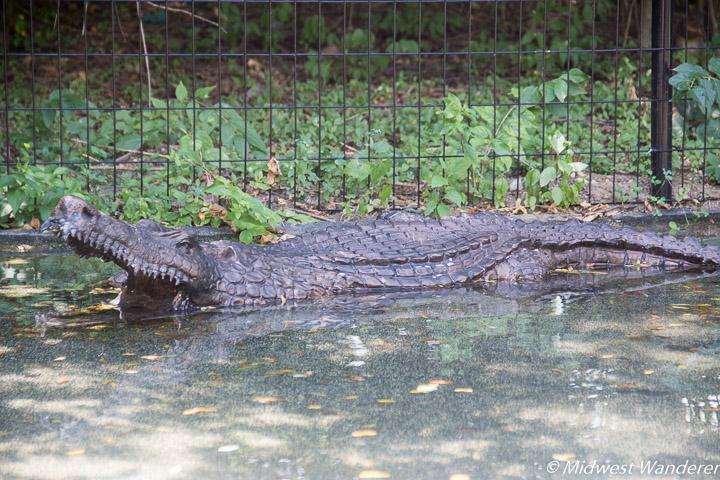 fake crocodile