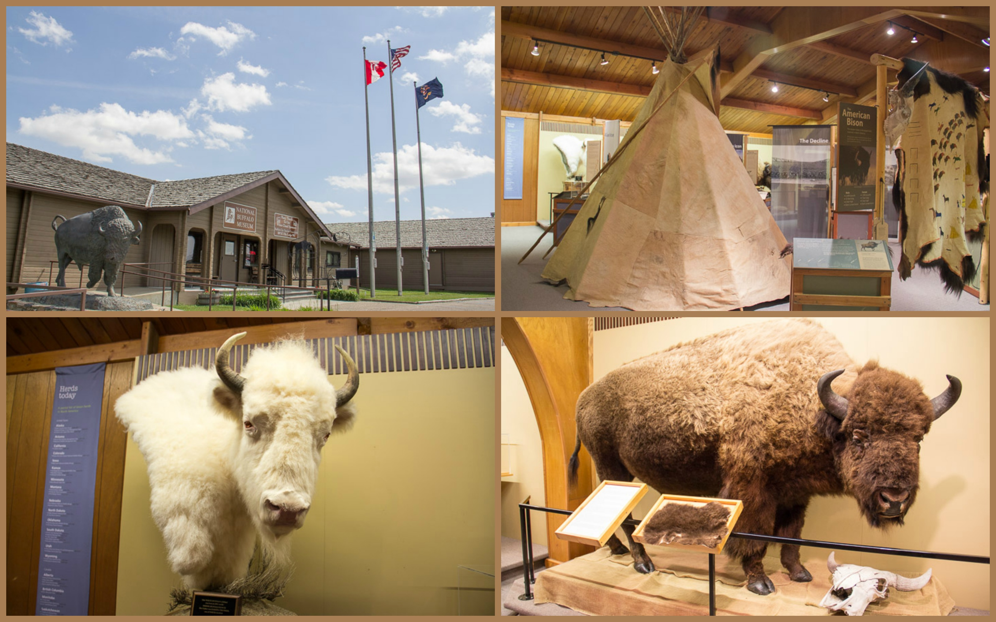 National Buffalo Museum, Jamestown, North Dakota