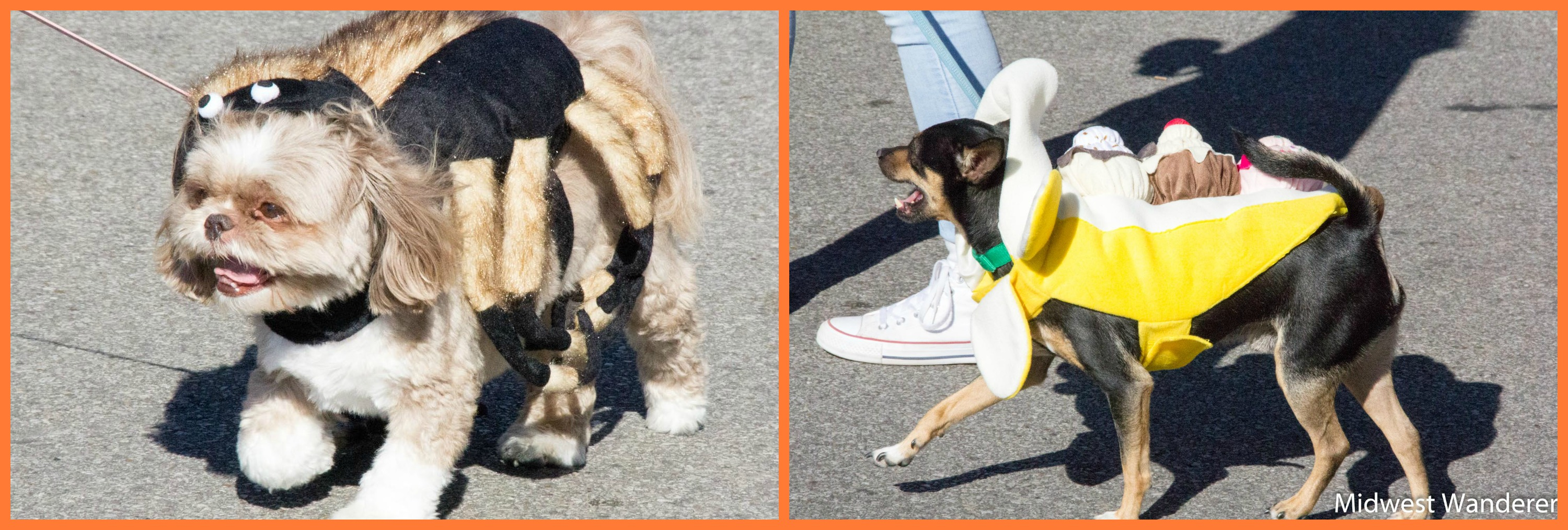 Pets in Newburgh Halloween Parade