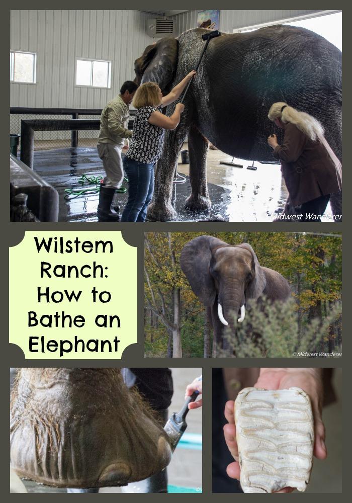 Wilstem Ranch Elephant Retreat