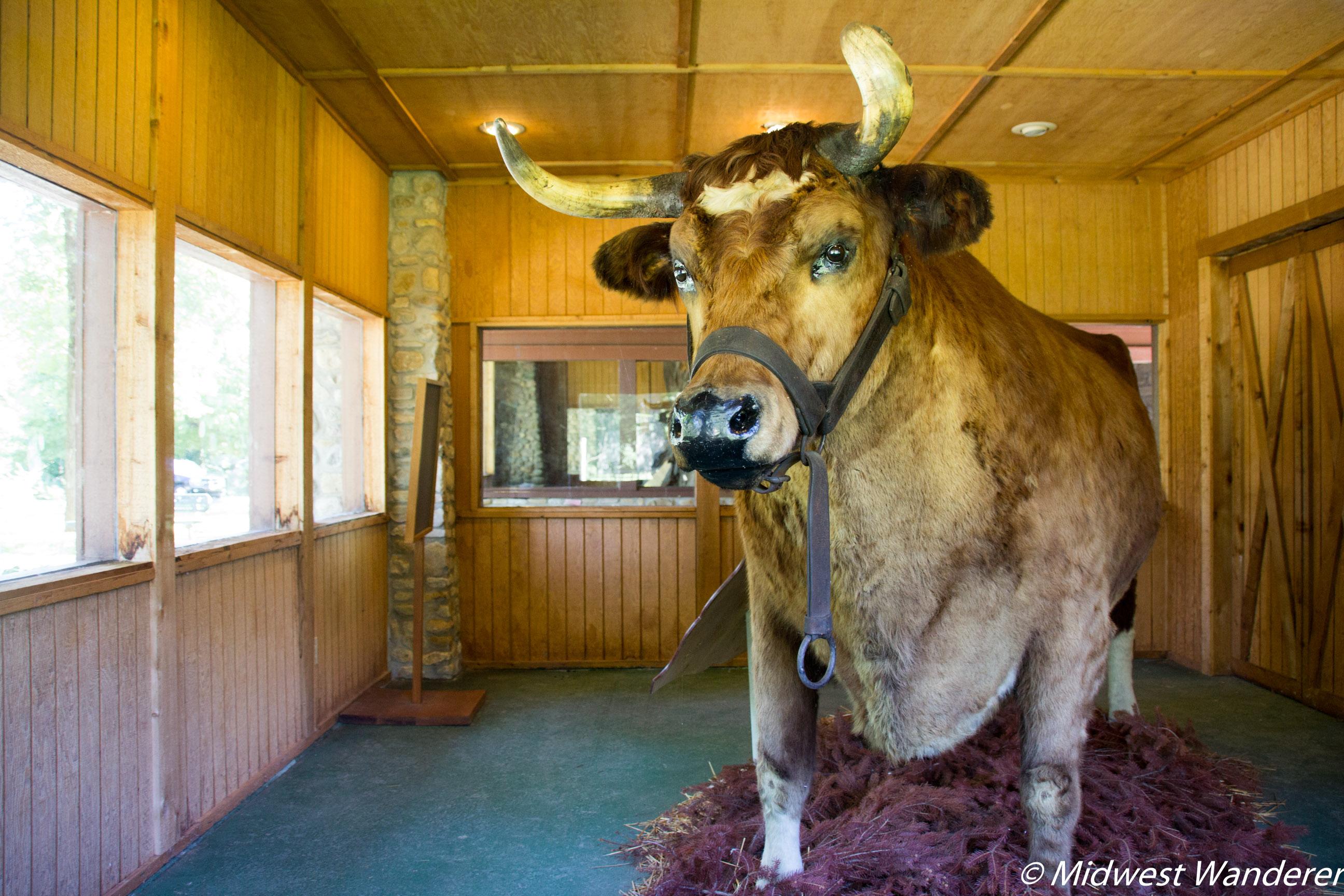 Old Ben, Worlds Largest Steer