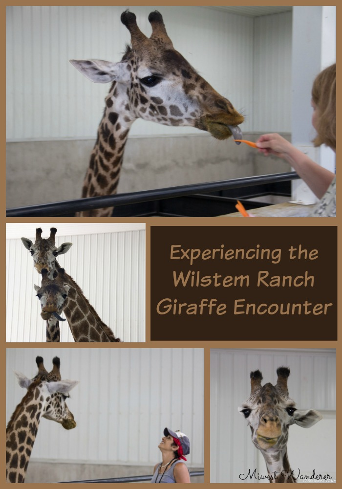Wilstem Ranch Giraffe Encounter