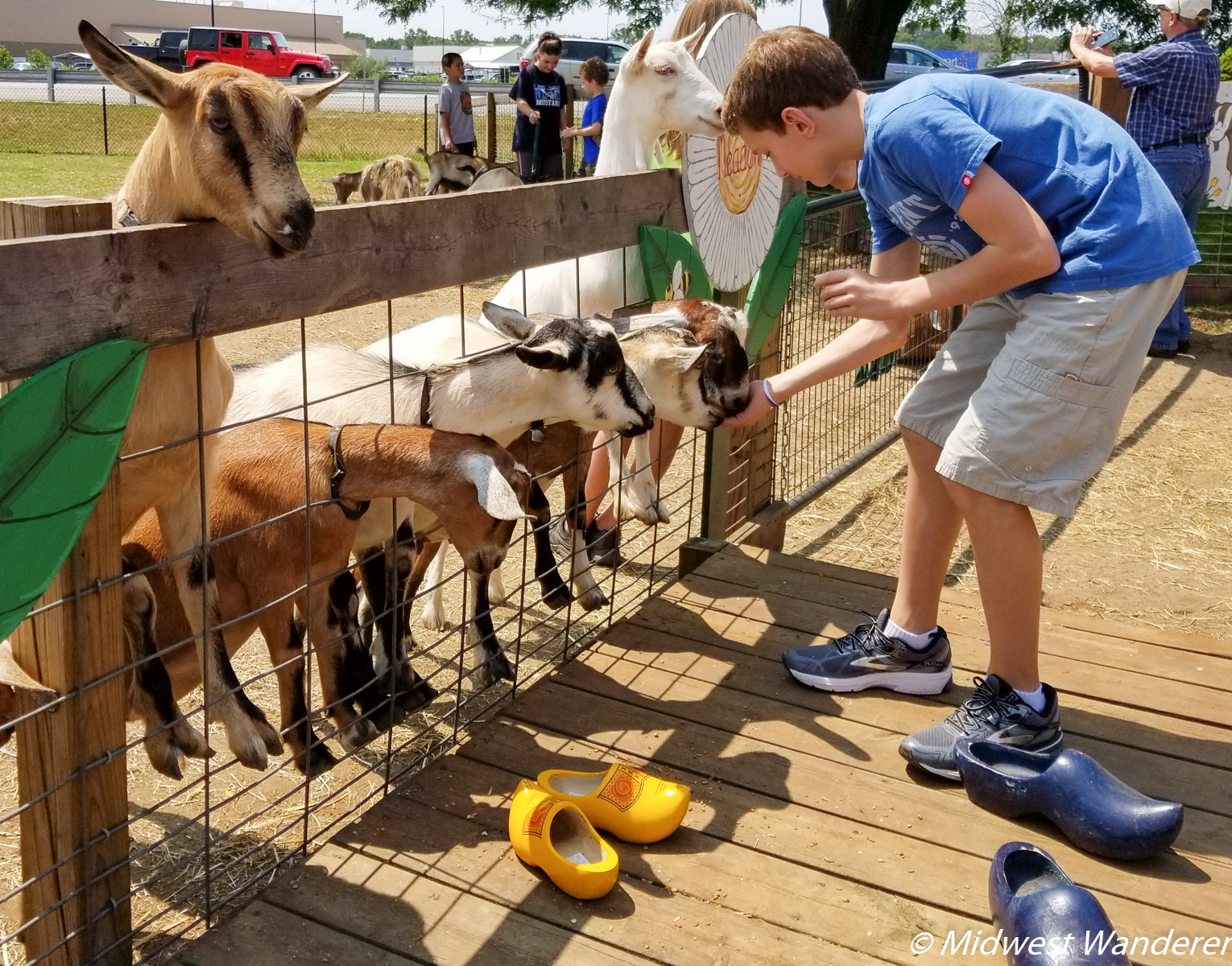 Feeding the goats in the petting zoo