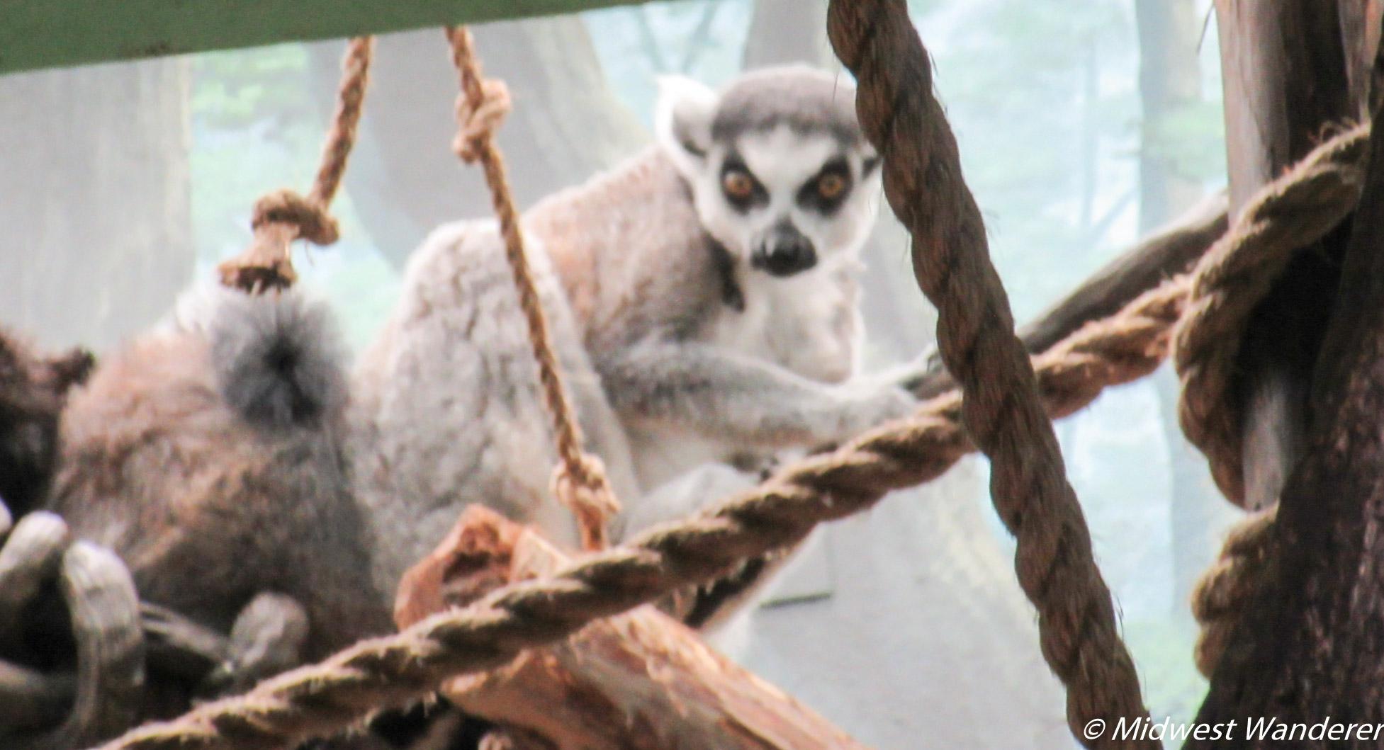 Saint Louis Zoo - Monkey Pair
