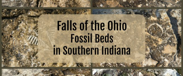 Exploring Falls of the Ohio Fossil Beds