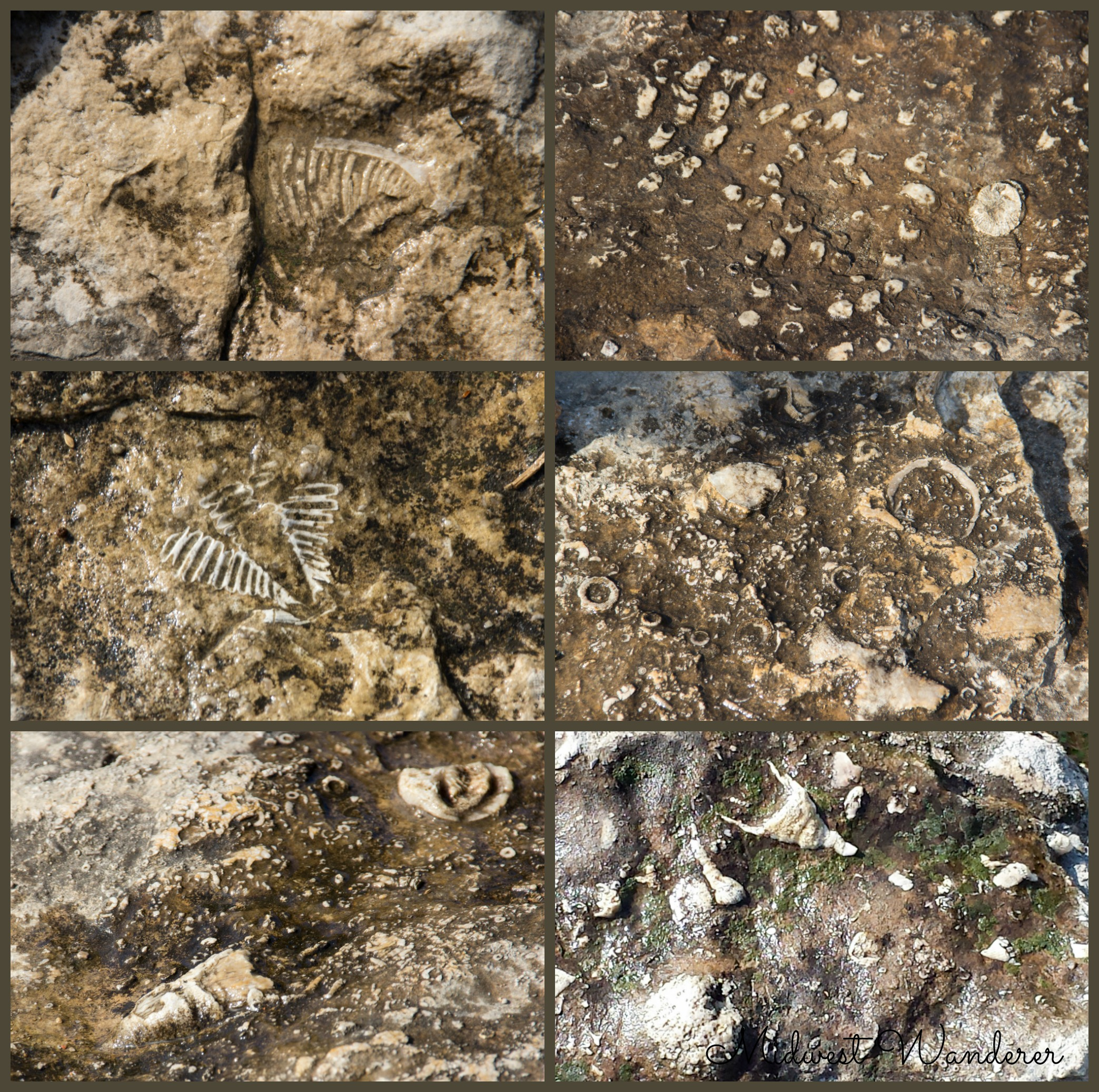 Falls of the Ohio Fossils - 3