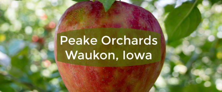 Apple Time at Peake Orchards