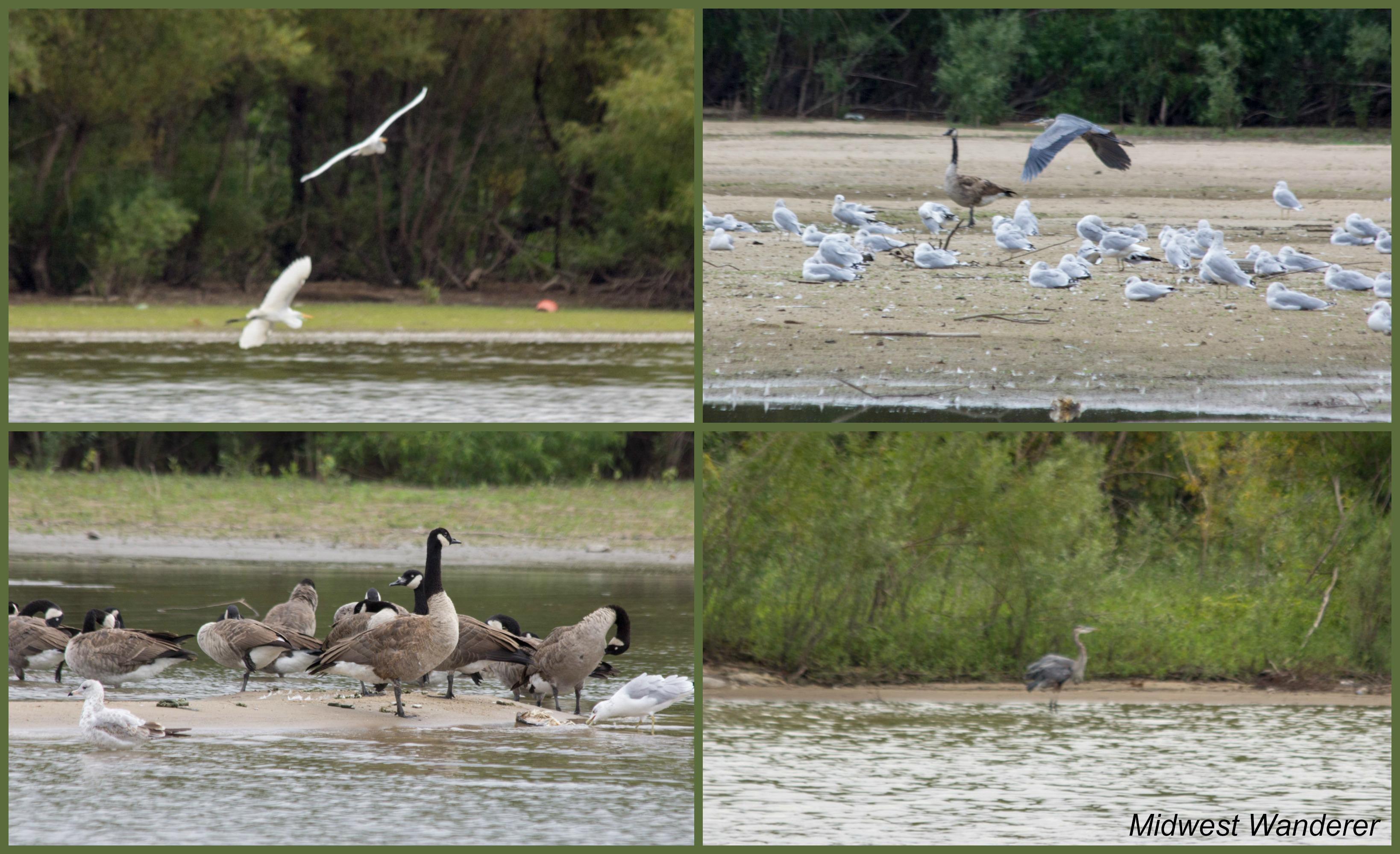 Illinois River wildlife