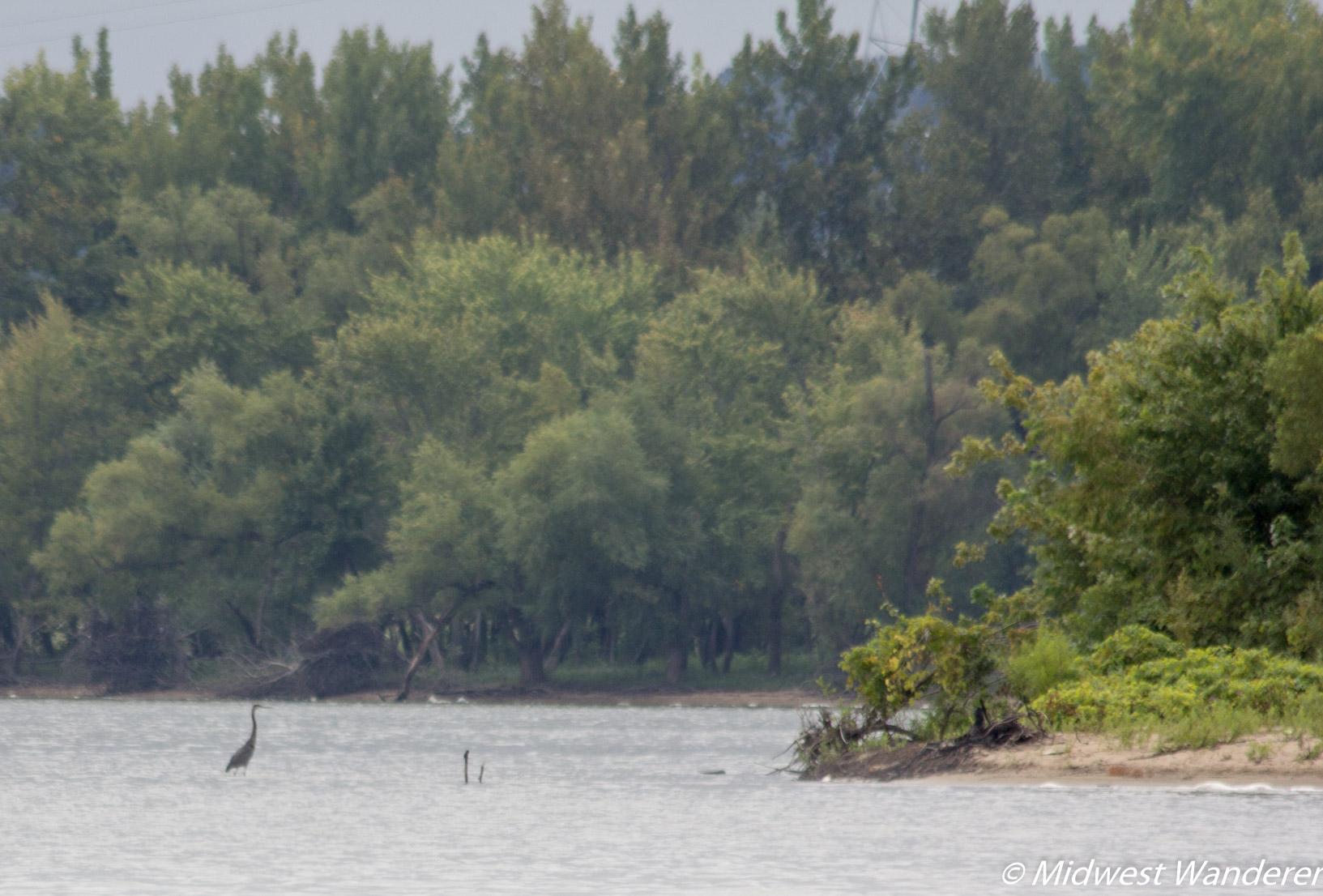 Wildlife on the Illinois River